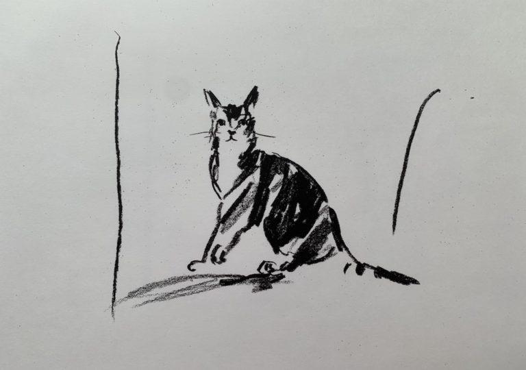 おーくん・あきらの絵本「GATITO」ページ17